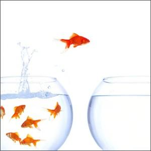 """Como um peixe fora d'água: o programa do """"refugiado"""""""